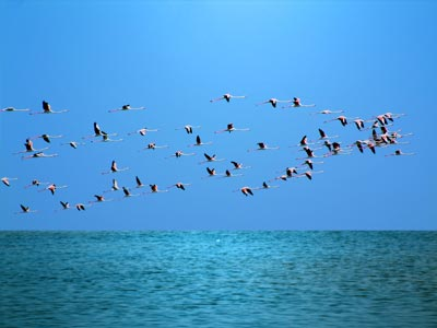 Anaya Odisha - Photo Gallery - Birds at Chilka Lagoon